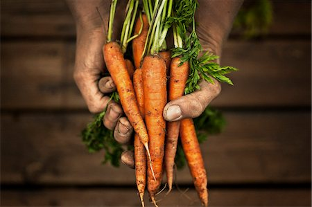 dirt - Hands holding carrot, studio shot Stock Photo - Premium Royalty-Free, Code: 6102-07602636