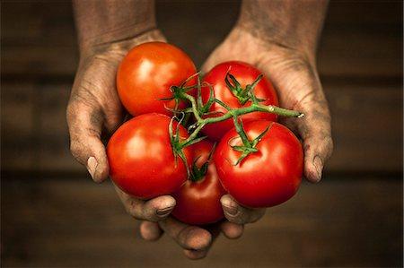 dirty - Hands holding tomatoes, studio shot Stock Photo - Premium Royalty-Free, Code: 6102-07602639