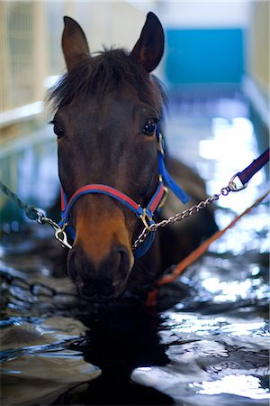 rehabilitation - Horse having hydrotherapy treatment Stock Photo - Premium Royalty-Free, Code: 6102-07790141