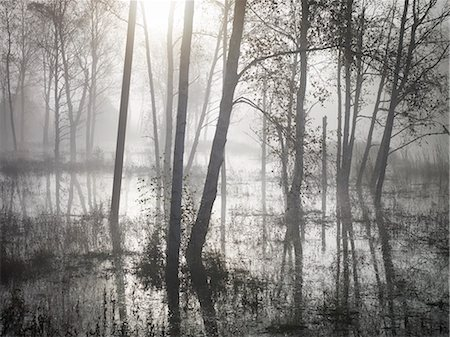 fog (weather) - Forest in morning fog Stock Photo - Premium Royalty-Free, Code: 6102-07842815