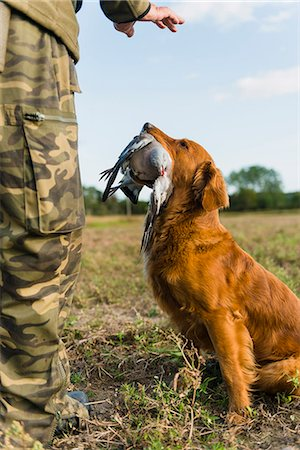 Dog giving dead bird to hunter Stock Photo - Premium Royalty-Free, Code: 6102-07844274