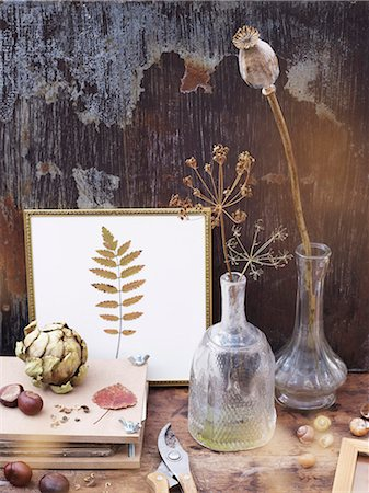 Still life with dry plants Stock Photo - Premium Royalty-Free, Code: 6102-08001027