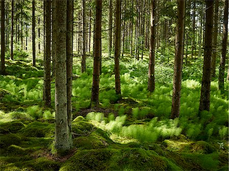 forest - Forest Stock Photo - Premium Royalty-Free, Code: 6102-08001354