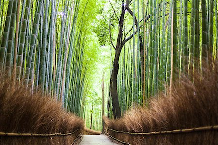 scenic view - Footpath leading through bamboo forest Stock Photo - Premium Royalty-Free, Code: 6102-08001475