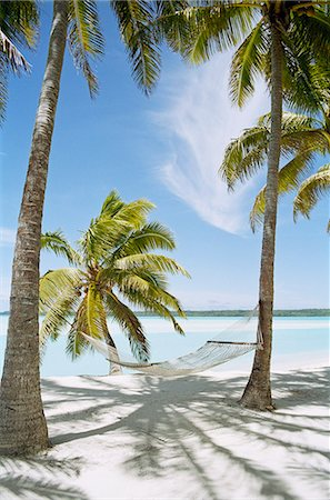 Palm trees with hammock on sandy beach Stock Photo - Premium Royalty-Free, Code: 6102-08183968
