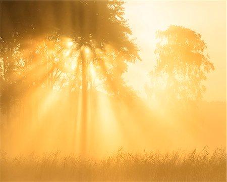 Sunbeams Stock Photo - Premium Royalty-Free, Code: 6102-08120146
