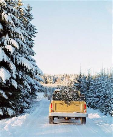 Pick up truck with pine tree on back Stock Photo - Premium Royalty-Free, Code: 6102-08120886