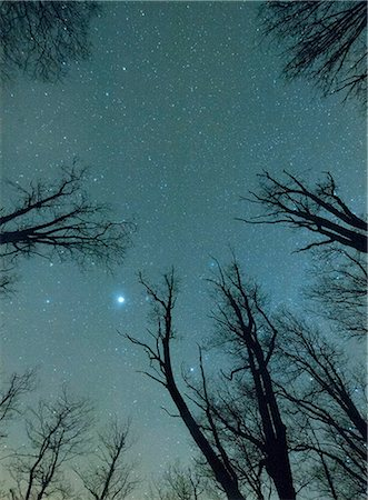 sky stars - Trees against starry sky Stock Photo - Premium Royalty-Free, Code: 6102-08384479