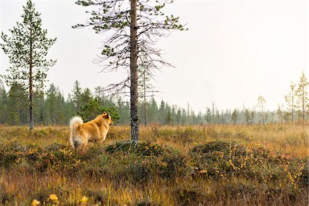 dogs in nature - Dog looking away Stock Photo - Premium Royalty-Free, Code: 6102-08384484