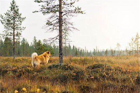 Dog looking away Stock Photo - Premium Royalty-Free, Code: 6102-08384484