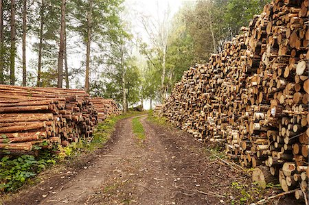 forestry - Logs along dirt track Stock Photo - Premium Royalty-Free, Code: 6102-08642037
