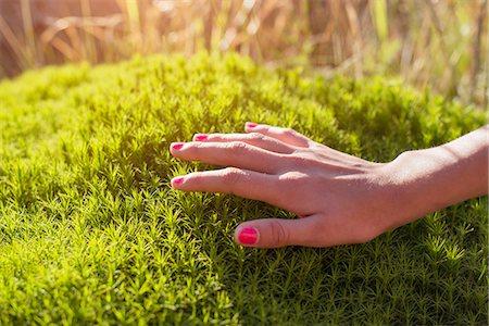 Female hand touching green moss Stock Photo - Premium Royalty-Free, Code: 6102-08882382