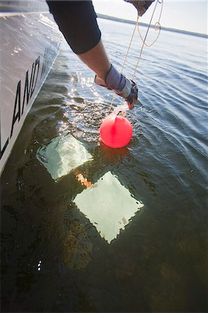 Scientist pulling up a buoy attached to an algae sample Stock Photo - Premium Royalty-Free, Code: 6105-05396406