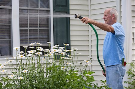 Senior man spraying his daisies in outdoor garden Stock Photo - Premium Royalty-Free, Code: 6105-06703032