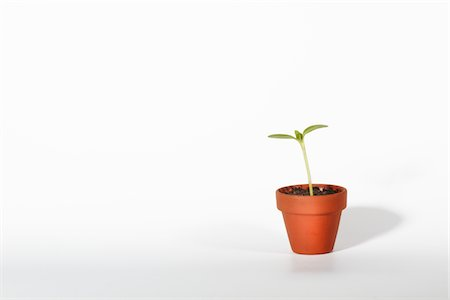 potted plant - Seedling growing from plant pot Stock Photo - Premium Royalty-Free, Code: 6106-05393795