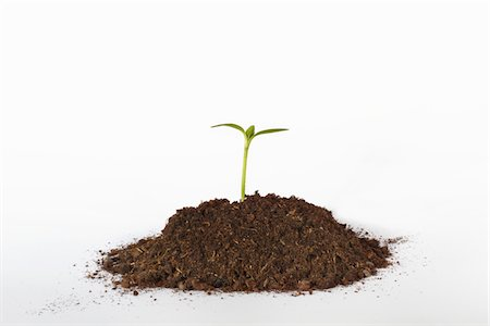 dirt - Seedling growing from mound of soil Stock Photo - Premium Royalty-Free, Code: 6106-05393798
