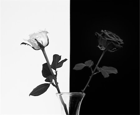 rose - A white and a black rose Stock Photo - Premium Royalty-Free, Code: 6106-05394646