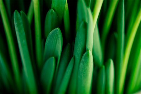 spring background - Leaves Stock Photo - Premium Royalty-Free, Code: 6106-05394940