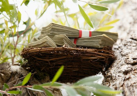 Nest filled with cash in tree, horizontal Stock Photo - Premium Royalty-Free, Code: 6106-05394955
