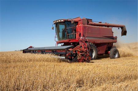 Straight cut harvest Stock Photo - Premium Royalty-Free, Code: 6106-05443051