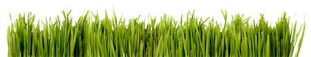 Real Grass Border Stock Photo - Premium Royalty-Free, Code: 6106-05444603