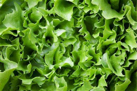 Lettuce Stock Photo - Premium Royalty-Free, Code: 6106-05445066