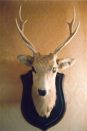 deer hunt - Stuffed deer head hanging on wall Stock Photo - Premium Royalty-Free, Code: 6106-05477684