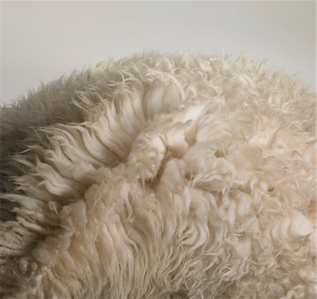 fur - Detail of a sheepskin rug Stock Photo - Premium Royalty-Free, Code: 6106-05487507