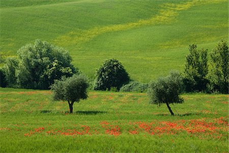 tuscany 2008 Stock Photo - Premium Royalty-Free, Code: 6106-05490976