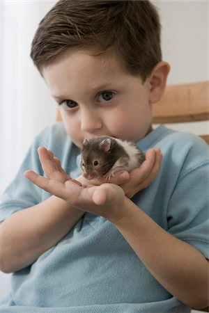 Little boy playing with his hamster Stock Photo - Premium Royalty-Free, Code: 6106-05492171