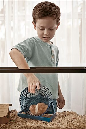 Little boy caring for his hamster Stock Photo - Premium Royalty-Free, Code: 6106-05492182