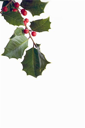 mistletoe holly on white background Stock Photo - Premium Royalty-Free, Code: 6106-05493438
