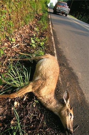 deer hunt - Animal accident Stock Photo - Premium Royalty-Free, Code: 6106-05493873