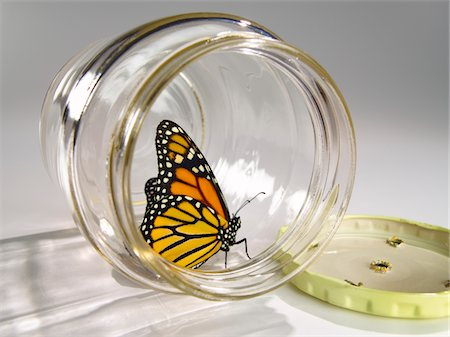 release - Monarch sitting in a jar Stock Photo - Premium Royalty-Free, Code: 6106-05495275