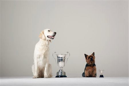 Two dogs standing beside their trophies Stock Photo - Premium Royalty-Free, Code: 6106-05497872