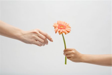Hand of child who passes mother flower Stock Photo - Premium Royalty-Free, Code: 6106-05405614