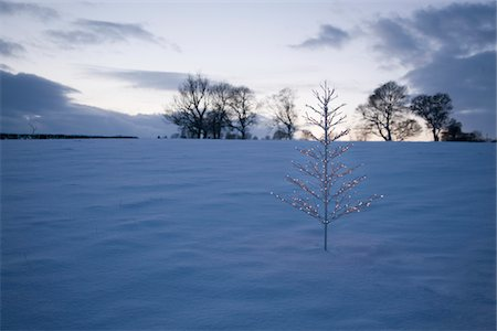 man made Christmas tree in a Winter landscape Stock Photo - Premium Royalty-Free, Code: 6106-05410717