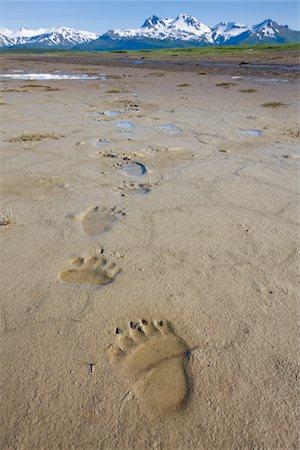 Brown Bear Tracks, Katmai National Park, Alaska Stock Photo - Premium Royalty-Free, Code: 6106-05414653