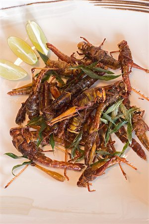 Fried grasshoppers on a plate Stock Photo - Premium Royalty-Free, Code: 6106-05415510