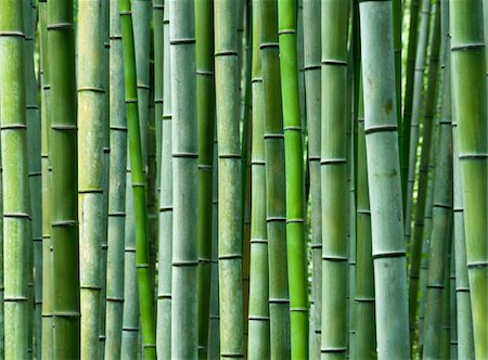 repeating - Bamboo Stock Photo - Premium Royalty-Free, Code: 6106-05421557