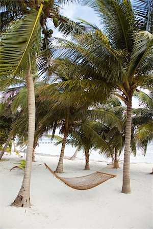 Hammock hanging between palm trees Stock Photo - Premium Royalty-Free, Code: 6106-05425954