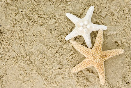 sea star - Two Starfish Stock Photo - Premium Royalty-Free, Code: 6106-05427509