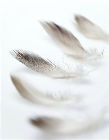 feather  close-up - Feathers Stock Photo - Premium Royalty-Free, Code: 6106-05431208