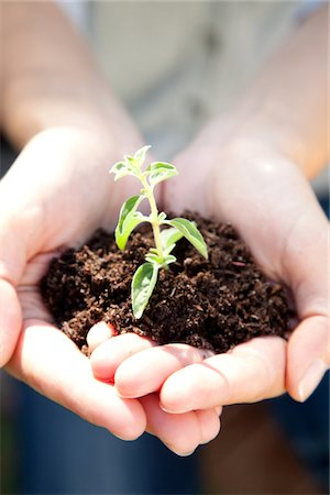 dirt - Woman holding seedling in dirt, close-up Stock Photo - Premium Royalty-Free, Code: 6106-05437127