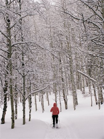 Young woman snowshoeing in grove of aspen trees, rear view, winter Stock Photo - Premium Royalty-Free, Code: 6106-05586600