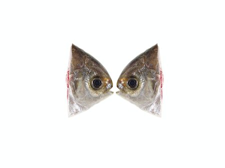 Two fish heads on white background, side view (digital composite) Stock Photo - Premium Royalty-Free, Code: 6106-05504039