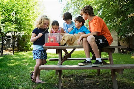 Group of children (7-13) with dog sitting on picnic table, looking at hamster in cage Stock Photo - Premium Royalty-Free, Code: 6106-05504847