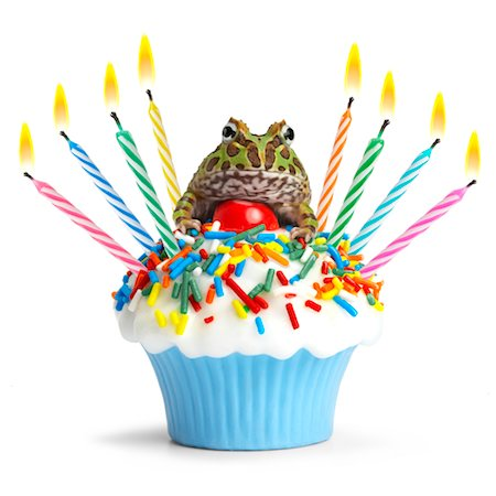 Pac Man Frog on cupcake Stock Photo - Premium Royalty-Free, Code: 6106-05506433