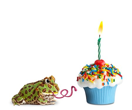 Pac Man Frog and cupcake, side view Stock Photo - Premium Royalty-Free, Code: 6106-05506434