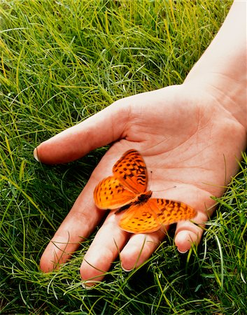 release - England, London, Great Spangled Fritillary butterfly on man's hand, close-up Stock Photo - Premium Royalty-Free, Code: 6106-05508418